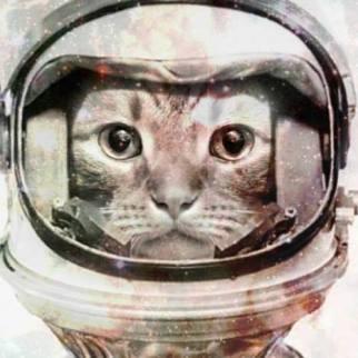 Morphing your pets into classic portraits - Antique Pet Portraits